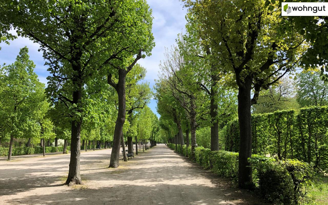 Schönbrunner Schlosspark